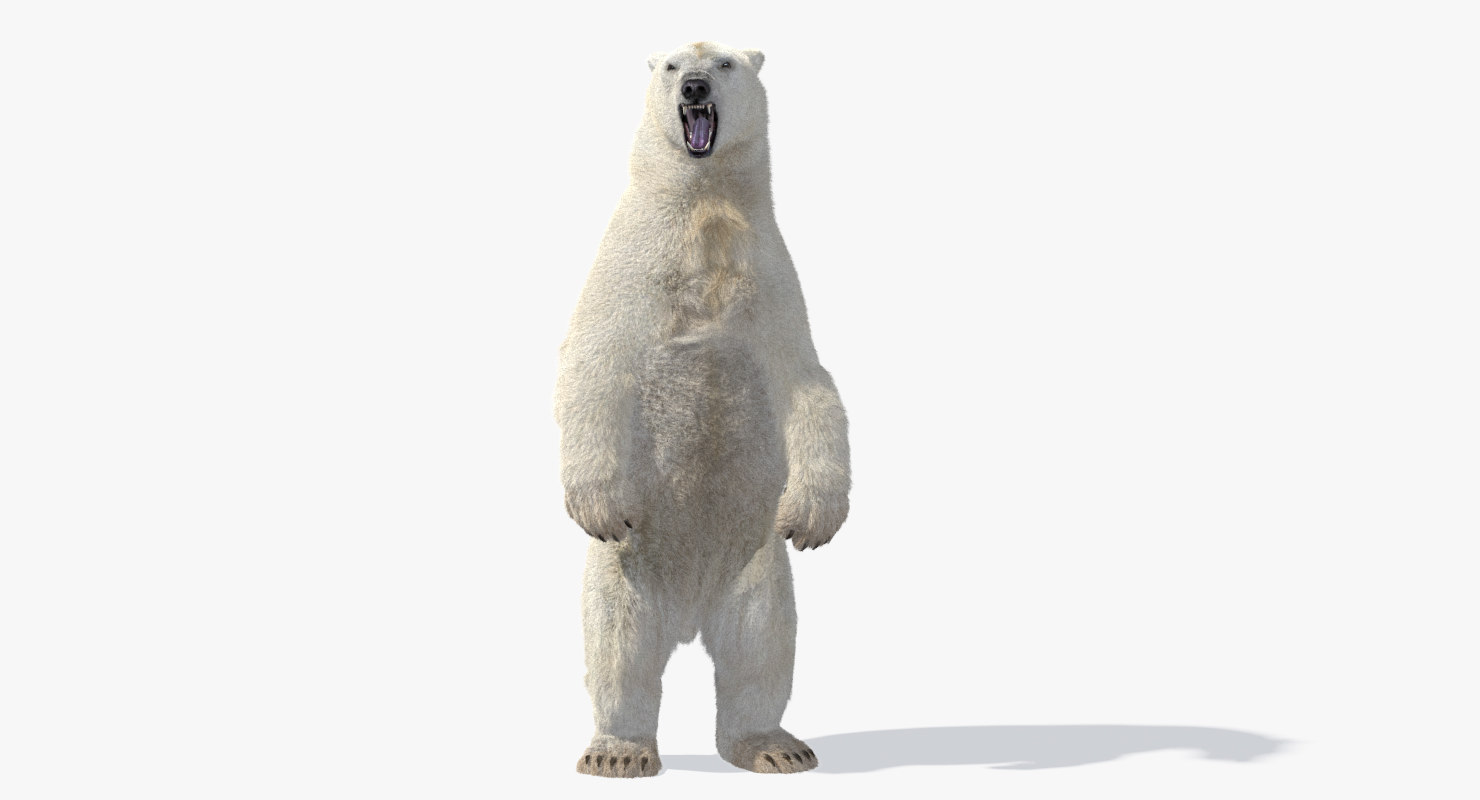 polar bear animation model