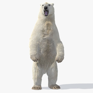 polar bear animation model