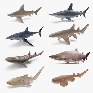 3D model shark sandbar hammerhead