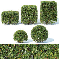 hedge cotoneaster cube 3D model