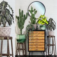 plants 123 3D