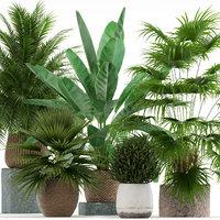 plants 125 3D