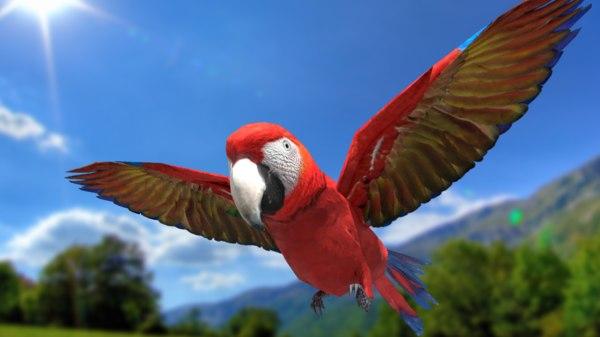 3D scarlet macaw