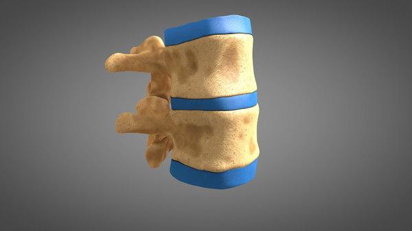 human spine 3D model