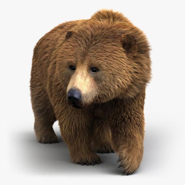 3D brown bear rigged 2