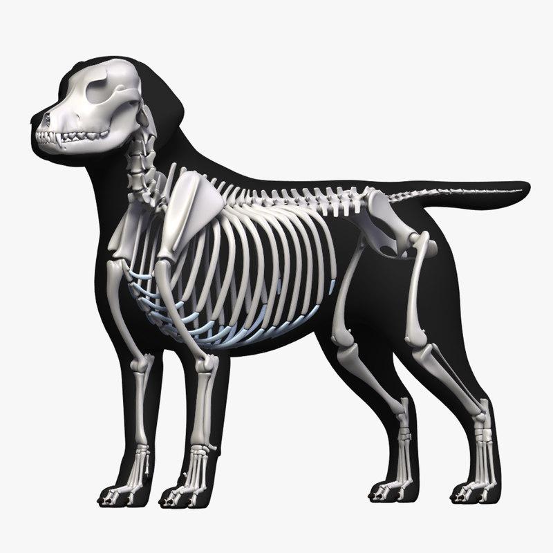 dog skeleton 3D
