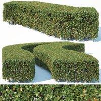 Cotoneaster lucidus # 6 wide rectangular hedge