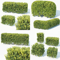 Buxus Sempervirens 4 hedges collection