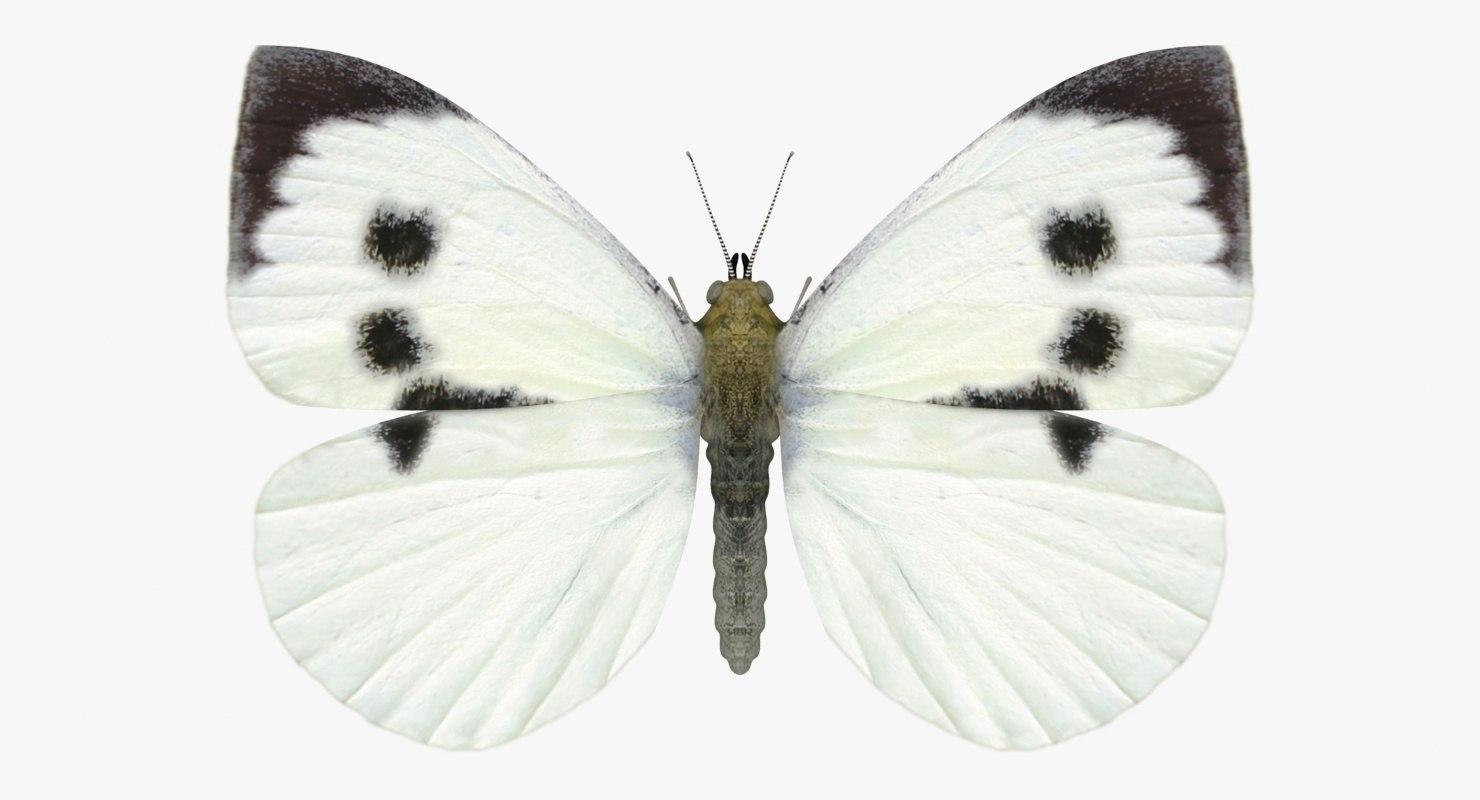 realistic large white female 3D model