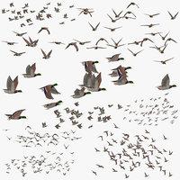 3D flocks ducks flying