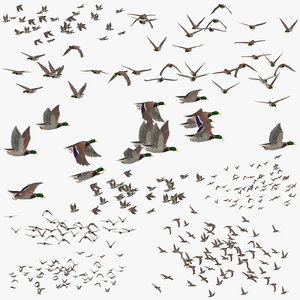 3D flocks ducks flying