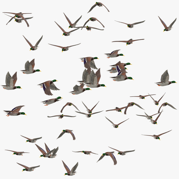 small flocks ducks flying model