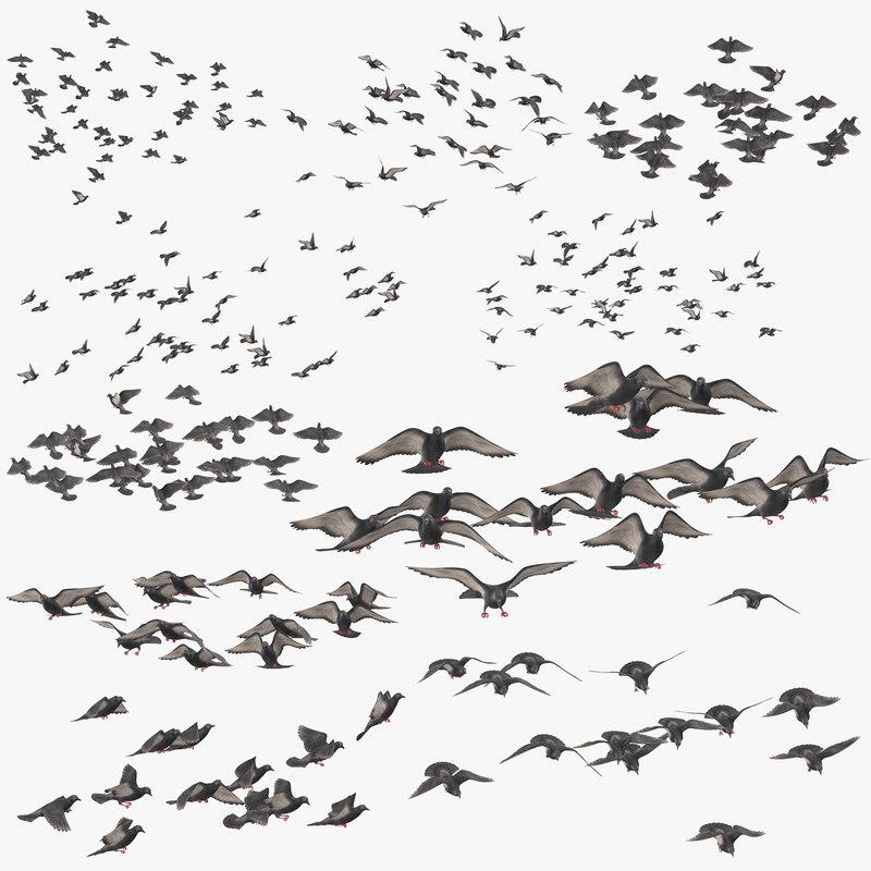 3D flocks pigeons flying
