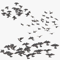 medium flocks pigeons flying 3D