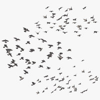 Large Flocks of Pigeons Flying