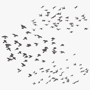 large flocks pigeons flying 3D model