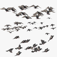 small flocks pigeons flying 3D model