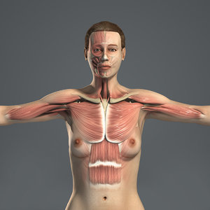 3D rigged female body muscular