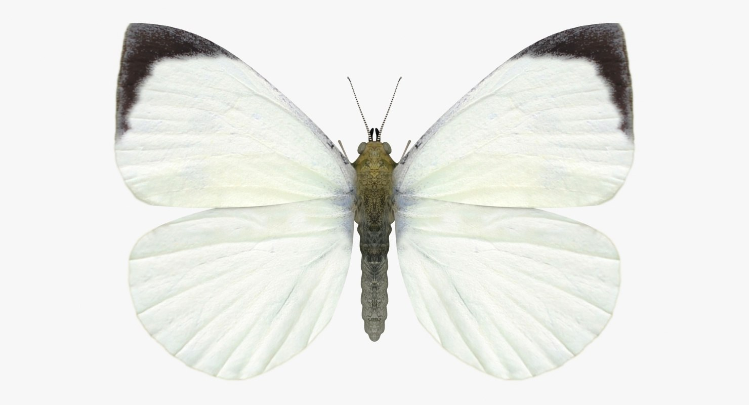 realistic large white male 3D