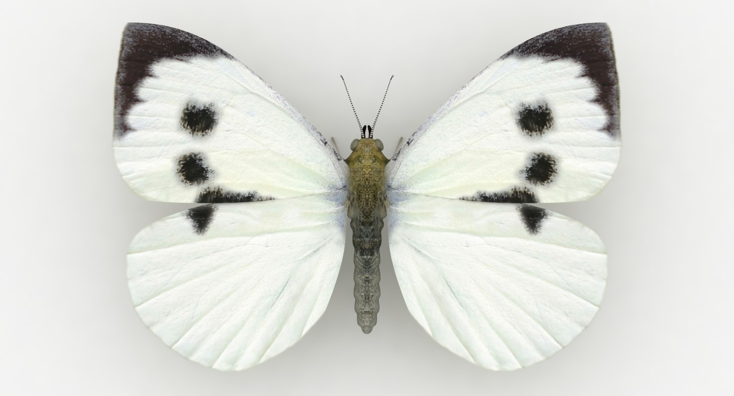 3D realistic large white model