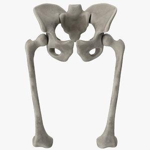 pelvis bones 3D model