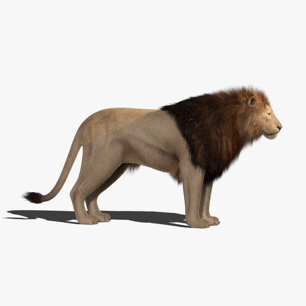 lion 2 fur animation 3D model