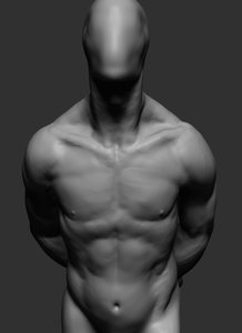 male anatomy model