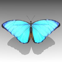 3D blue morpho butterfly animations model