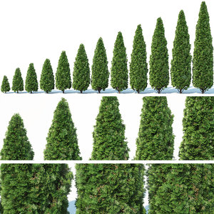 3D thuja smaragd occidentalis