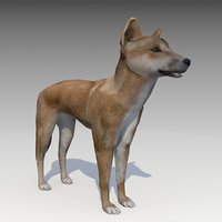 dingo animations 3D model