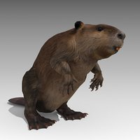 beaver animations 3D model