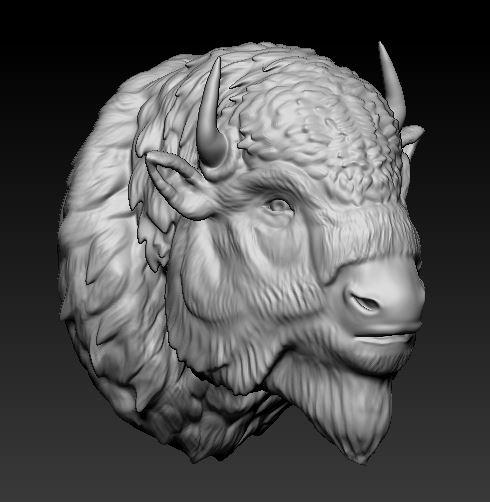 head bufallo model