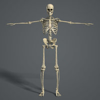 rigged human female skeletal 3D model