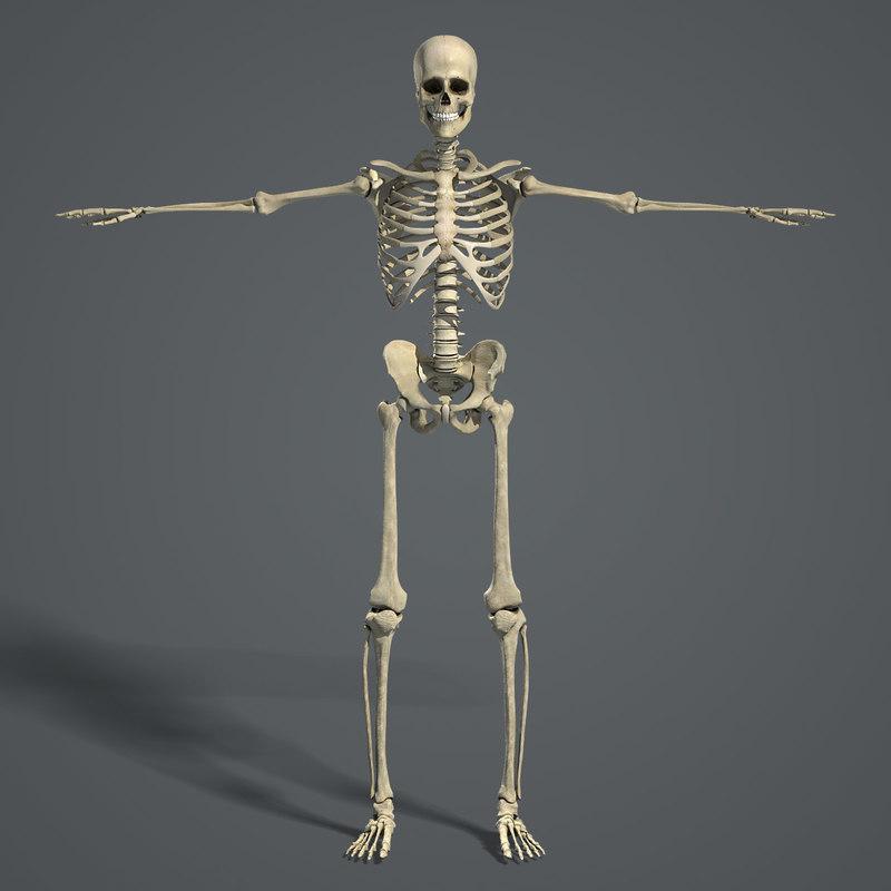 MAYA Rigged Female Skeleton