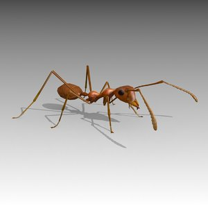 3D ant animations