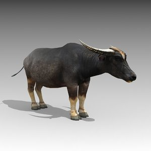 water buffalo animations model