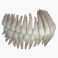 3D permanent dentition model