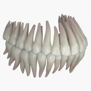 3D permanent dentition model