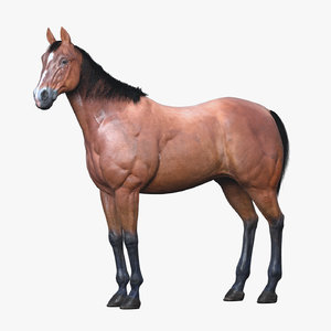 3D horse rigging animation walk