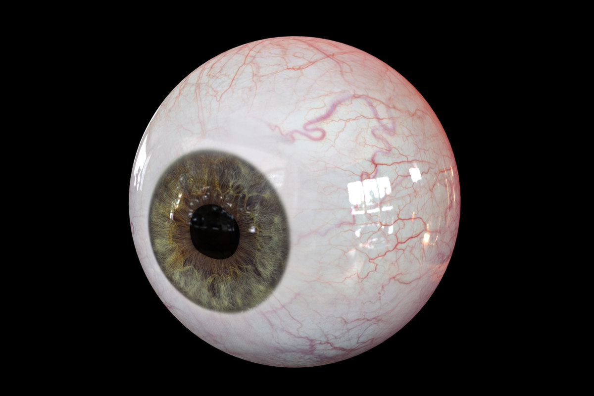 realistic human eye body anatomy model