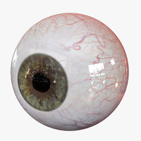 realistic human eye body anatomy model