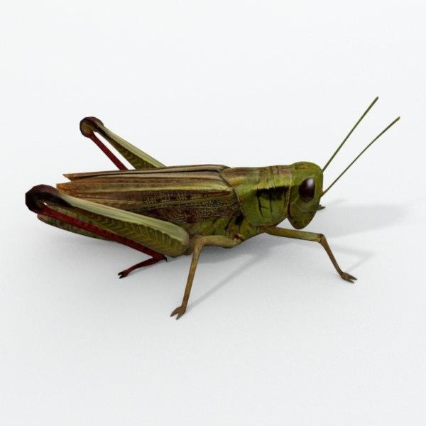 grasshopper games model