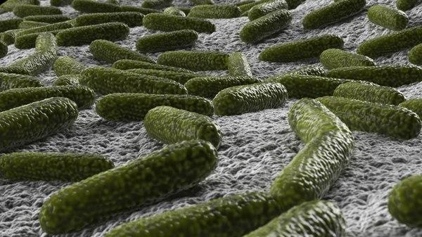 3D model bacteria pack
