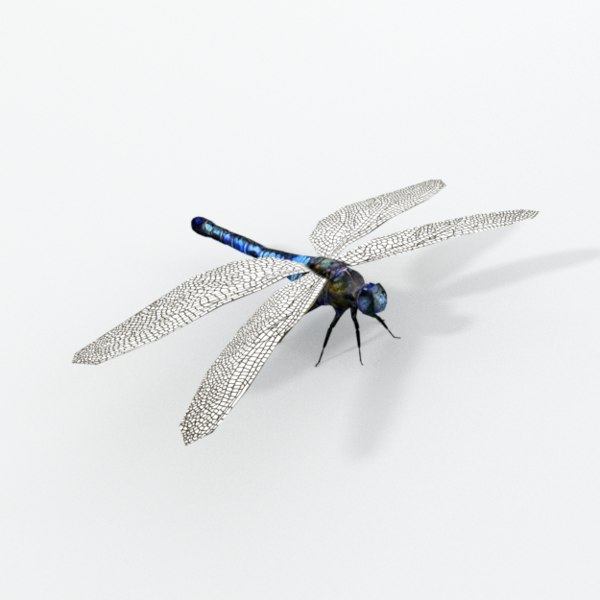 dragonfly model