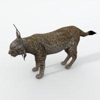 animals feline 3D model