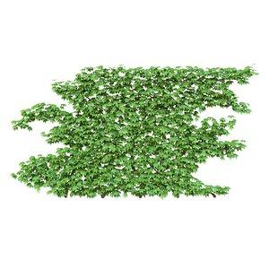 ivy wall model