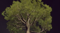 broadleaf tree bark model