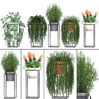 exotic plants pots 3D model