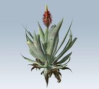 3D model succulent plant aloe