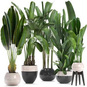 exotic plants banana tree 3D